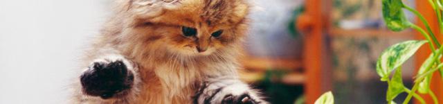 ネコちゃんの予防