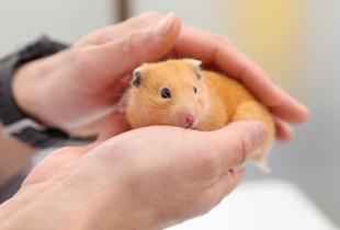 4.お昼診療予約で、他の動物たちが苦手なコも安心です。